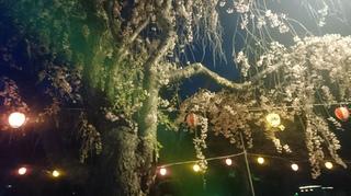 2019年4月22日夜桜榴ヶ岡公園龍神様と共に.JPG