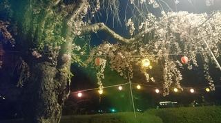 2019年4月22日夜桜榴ヶ岡公園龍神様と共に2.JPG